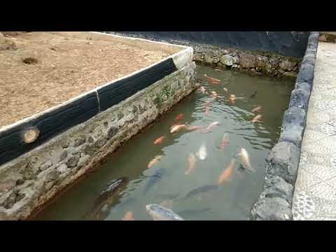 concept desain kolam ikan minimalis modern belakang rumah