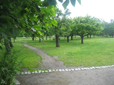 Rosendals fruktträdgård