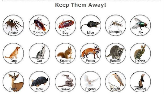 Why you should do pest control before moving into a new home? (with images) · directowners