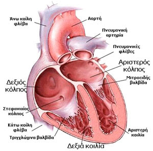 http://www.cardiolife.gr/images/information_heart.jpg
