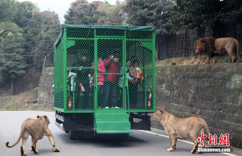 china-zoologico-animales-libres-3