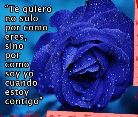 Rosas Azules Con Frases De Amor Rosas De Amor