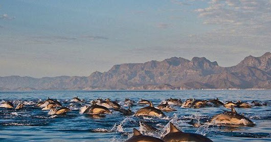 Like what you see?  Us, too - that's why we are working to keep it that way! Loreto Bay, in Baja California is a spectacular place, sadly threatened by unsustainable development. Read about our efforts to establish permanent federal protection fo