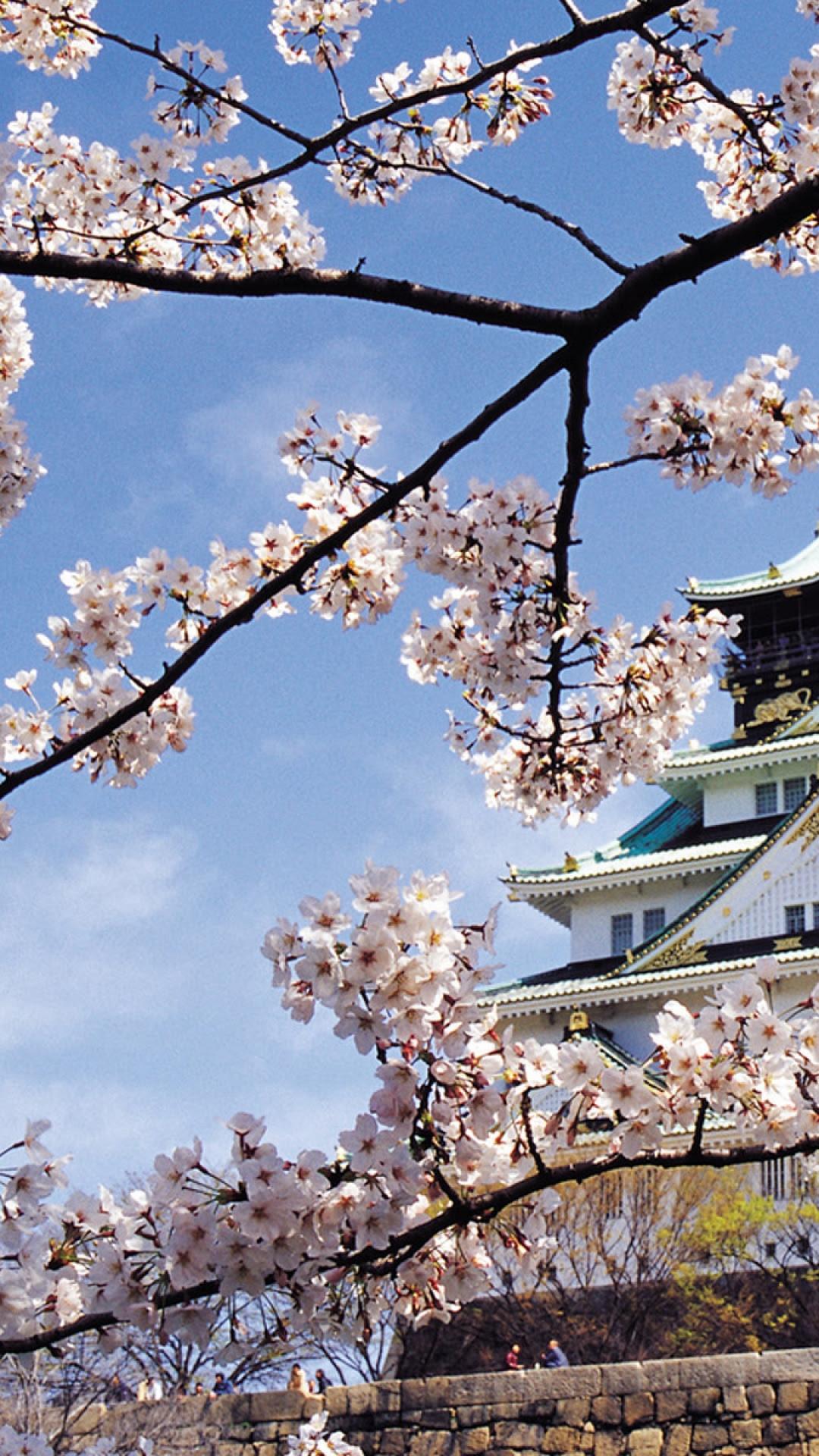 春の桜の宮殿の建築のiphone 8 Plus壁紙 Iphoneチーズ