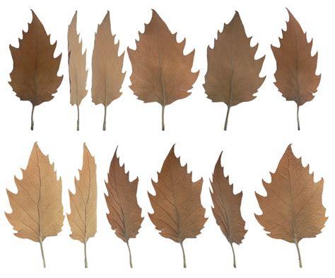 daun kering musim gugur gambar gratis  pixabay