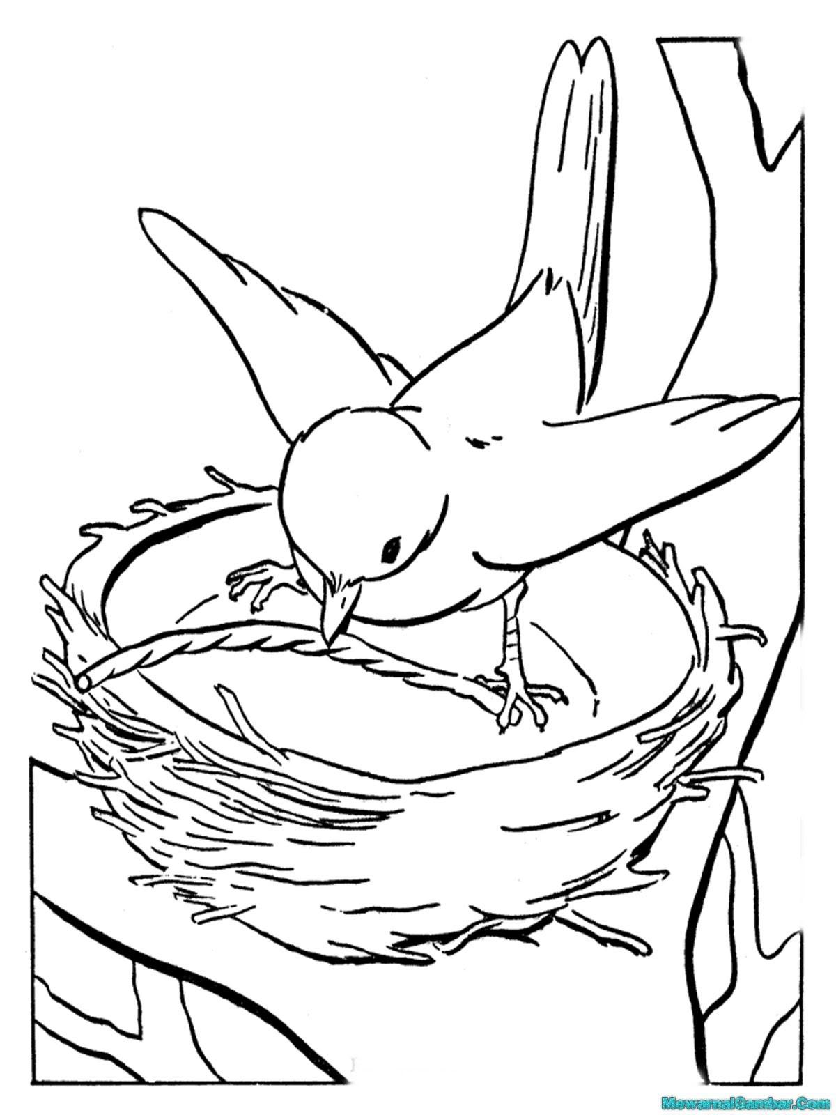 Mewarnai Gambar Burung Terbang
