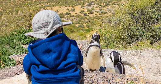 Visiting Penguins in Punta Tombo Argentina with Kids - Wandering Wagars