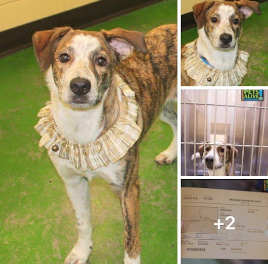 "Susie Davis on Twitter: ""#TN #MEMPHIS #SOS 🆘🆘URGENT Sterling 1yo boy,perfect pet!Needs loving home fast! No shares!! #adopt #rescue #pledge  """