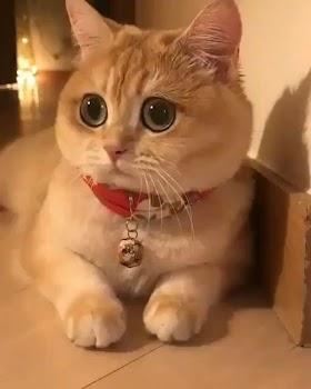 Kucing Lucu Gemes