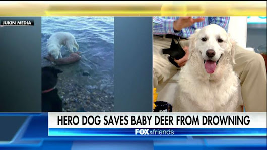Meet the Dog Who's Going Viral for Saving a Drowning Baby Deer