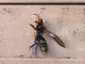 蜂の巣03.JPG