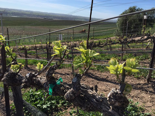 The Best of Wines and Barbecue of Santa Maria Valley