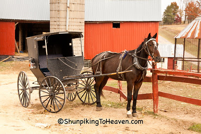 Horse and Buggy on Amish Farm, Vernon County, Wisconsin