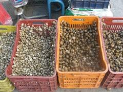 snails market athens