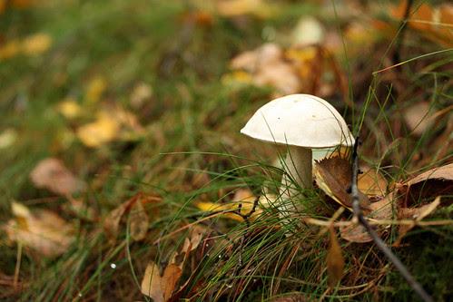 White mushroom woods