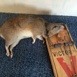 Kids, Mice and Rats: The Medical Risks of Rodents in Your Home, & 10 Ways to Get Rid of Them - ChildrensMD