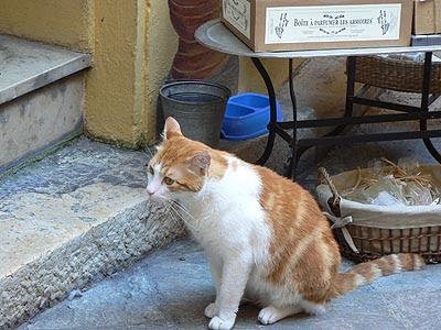 chat grassois.jpg
