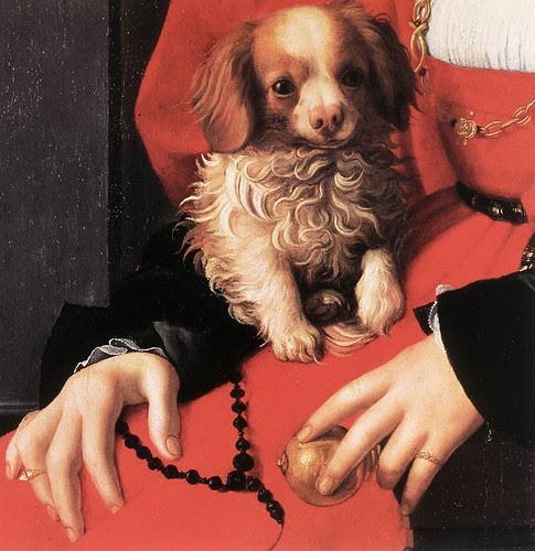 Bronzino dog