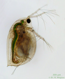 Invertebrates Pond