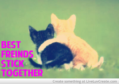 Best Friends Stick Together Cat Quotes Quotespicturescom