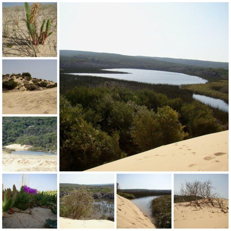 marley lagoon