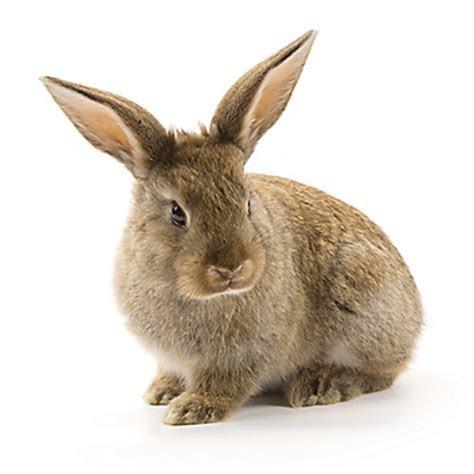 Facts About Rabbits   Rabbit Facts   Havahart®