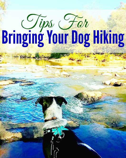 Tips For Bringing Your Dog Hiking – Miss Frugal Mommy