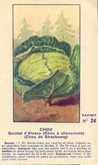 legume24 chou