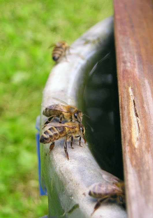 How To Attract Honey Bees To Your Organic Garden