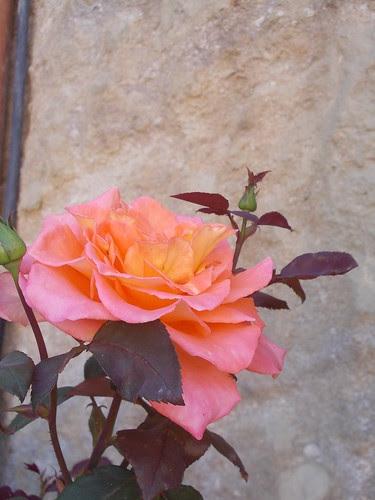 http://CMJardineria.blogspot.com by cmjardineria