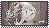 photo owls_by_folkve-d6jszb7.png