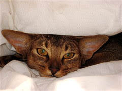 Jedda - hiding in the bedclothes