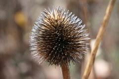 seeds8