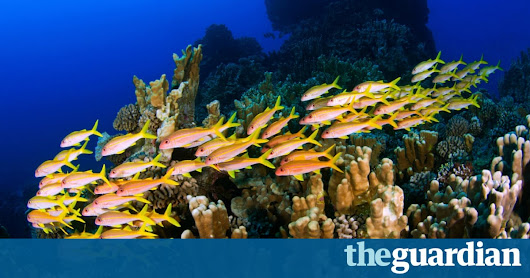 One of world's largest marine parks created off coast of Easter Island | Environment | The Guardian