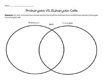 Wiring Diagram Database: Eukaryotic And Prokaryotic Venn ...