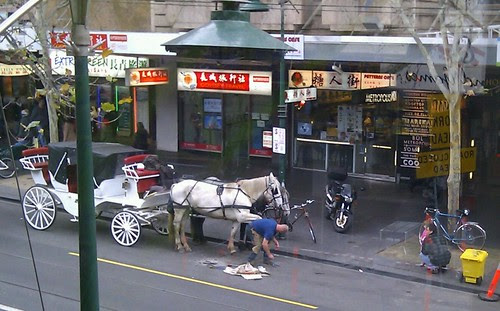 Farrier changing horseshoes on Swanston Street