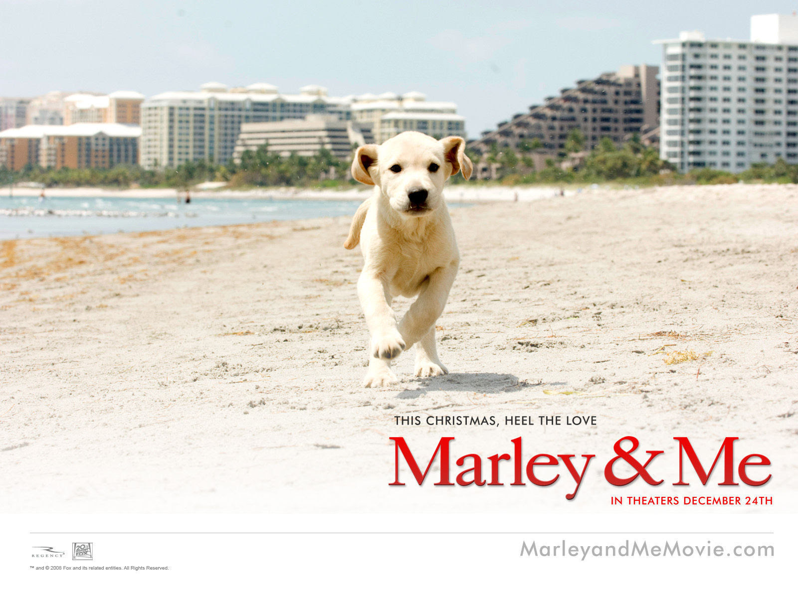 Marley And Me Images Marley Me Hd Wallpaper And Background Photos