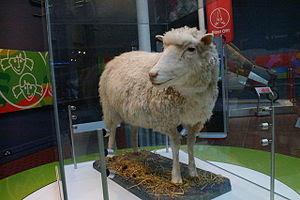 Dolly the sheep, National Museums of Scotland,...