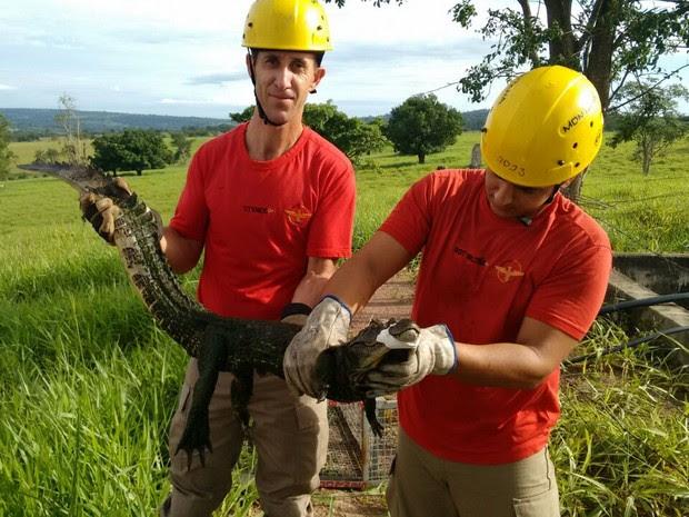 Bombeiros resgatam filhote de jacaré em reservatório de água de fazenda em Goiás (Foto: Divulgação/Corpo de Bombeiros)