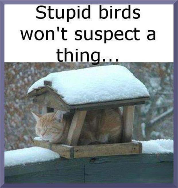Stupid Birds Wont Suspect A Thing Picture Quotes