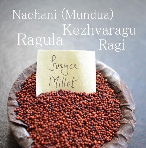 Finger Millet In Telugu