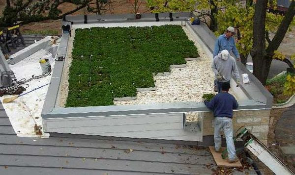 green roof 1