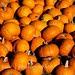 Citrus Heights Pumpkin Farm
