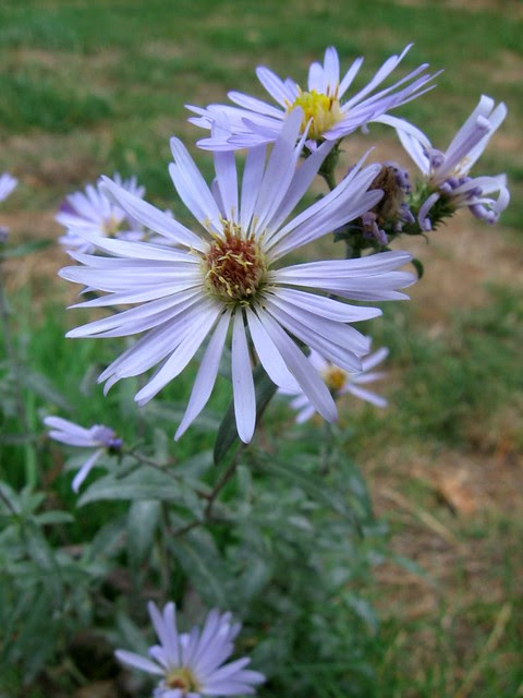 wildflower_near_psu