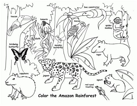 printable rainforest coloring pages coloring home