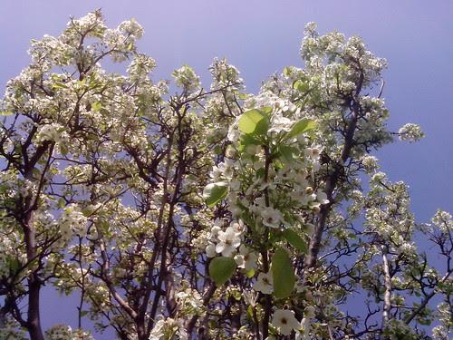 Primavera fiorita dall'alto by Ylbert Durishti