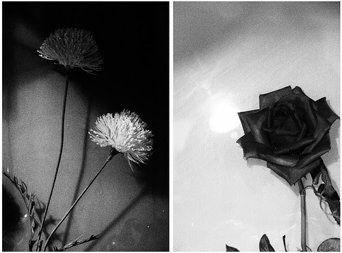 櫥窗假花黑白對比