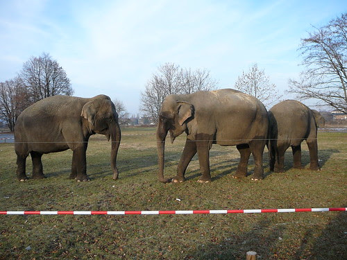 Elefanten des Zirkus Busch-Roland (02)