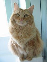 Jasper McKitten-Cat