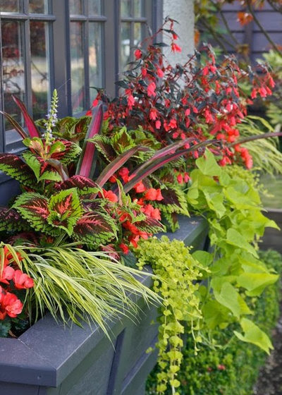 Choose Complementary Colors for Dazzling Container Gardens